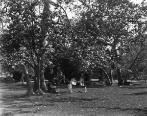 Figure 2: On the surface the park seemed to be a sylvan ideal, the reality was much more interesting. Source: Los Angeles Public Library Photo Collection, http://jpg2.lapl.org/pics20/00019799.jpg