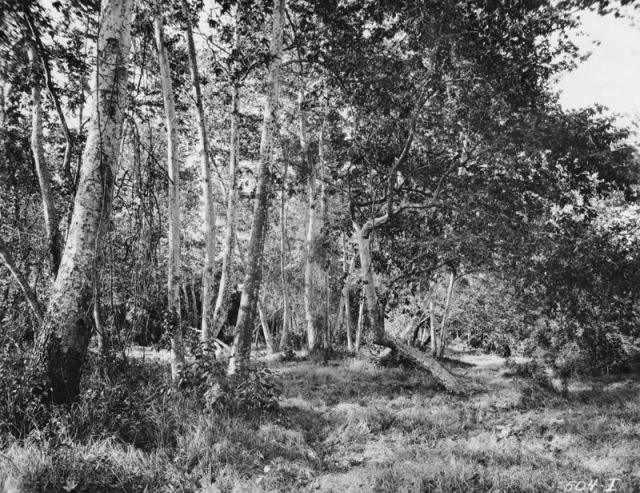 Figure 1: Photograph by Charles Beam. For much of its early history Sycamore Grove Park remained relatively wild. Source: Los Angeles Public Library Photo Collection,  http://jpg2.lapl.org/pics20/00019809.jpg